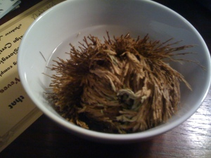 rose-of-jericho
